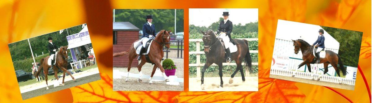 Debby Lush Equestrian