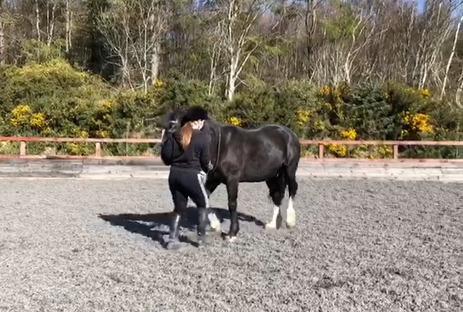 7 Easy steps to starting in hand work – Part 3 Rein Back